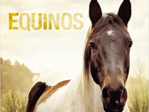 equinos 480x360 - 6 maneiras de prevenir doenças de casco em equinos