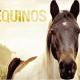 equinos 80x80 - Como identificar a idade dos cavalos?