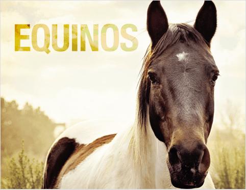 equinos - 6 maneiras de prevenir doenças de casco em equinos