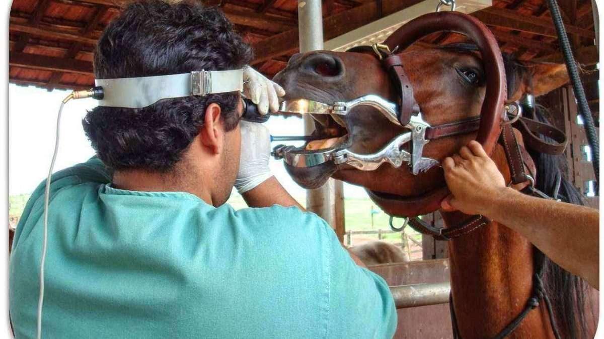 Como identificar a idade dos cavalos? Veja estas dicas rápidas!