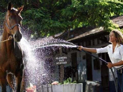higienização de cavalos