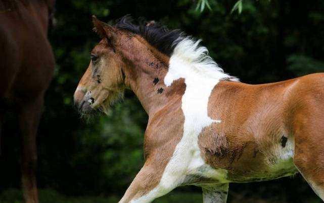 desenho cavalo