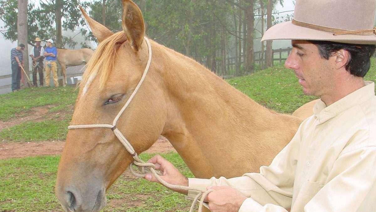 doma natural de cavalos
