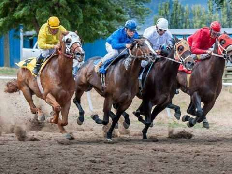 Cavalo Quarto de Milha: Veja os recordes mundias!