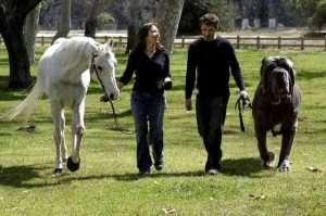 mastiff napolitano 2 300x199 - 10 raças de cachorros que você não conhece