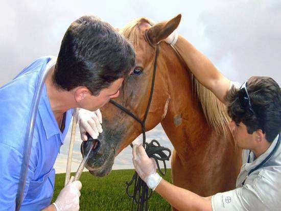 As principais doenças que atacam os cavalos e como evitá-las!