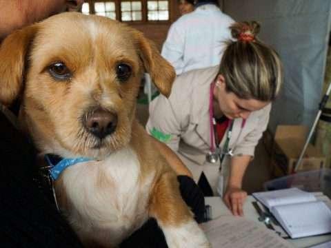 A importância da castração dos animais