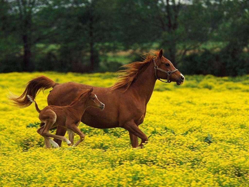 AS 40 MAIS INTERESSANTES CURIOSIDADES SOBRE O CAVALO 1024x768 - Tapete de borracha para transporte de cavalos HD-12 BOL