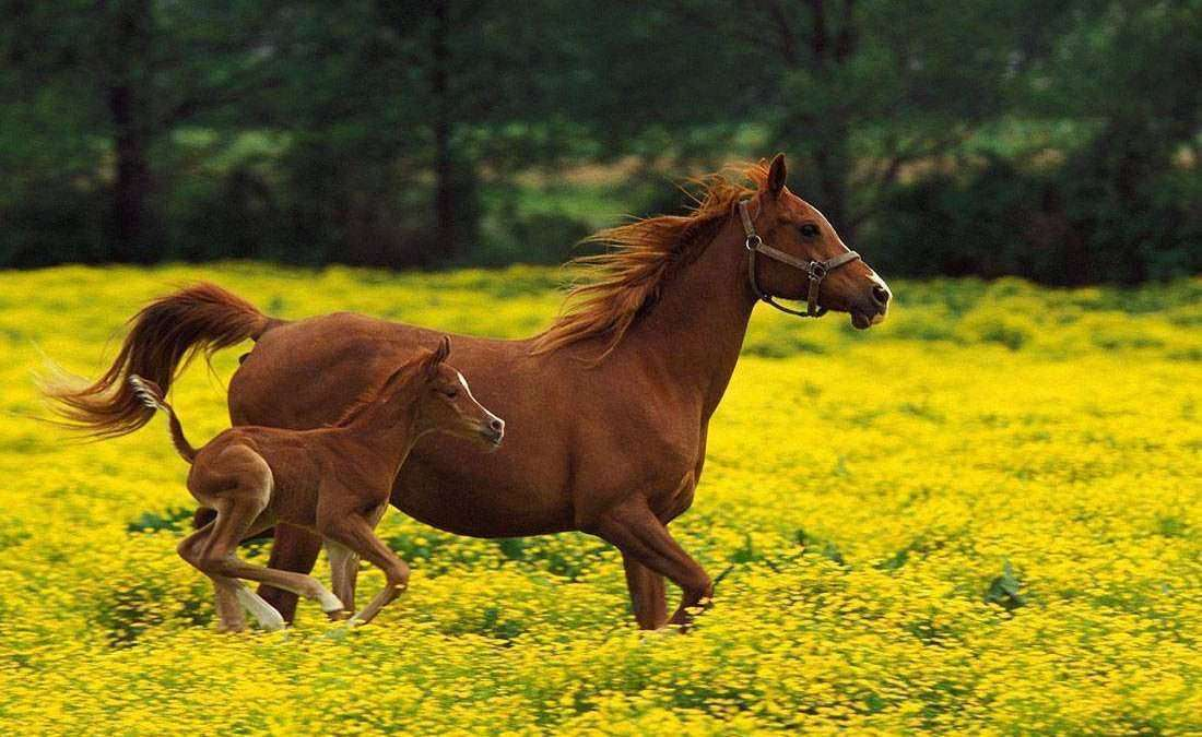Alimentação e nutrição de cavalos