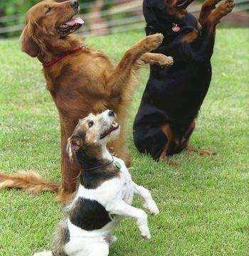 Sete Dicas Para Adestrar Caes 350x360 - Sete Dicas Para Adestrar Cães