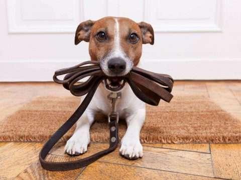 Dicas para Adestrar Cães: Veja como você mesmo pode adestar seu pet