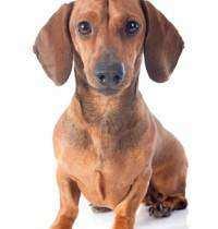 escolher raca de cachorro 6 - Como escolher a raça de cachorro ideal para você