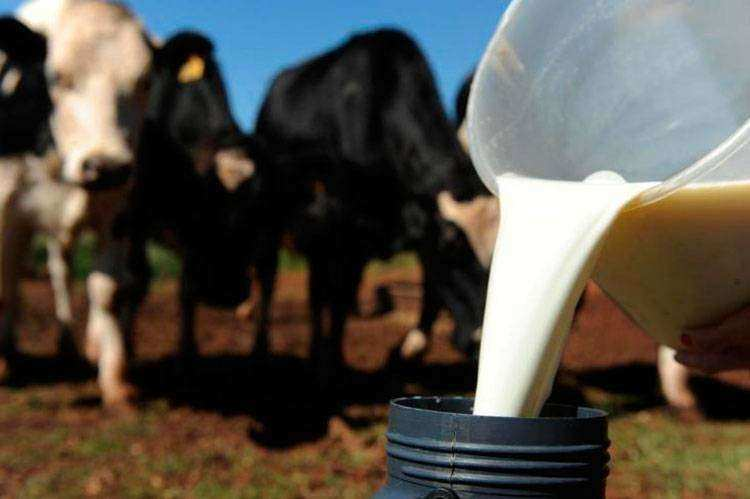 Boas práticas na produção de leite