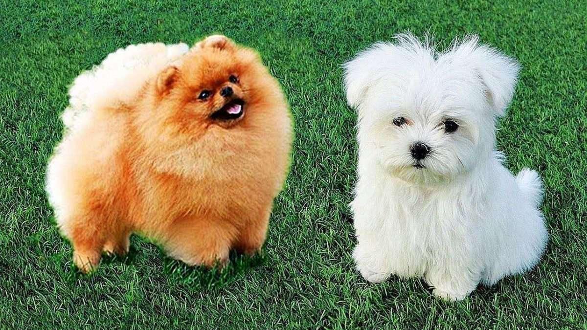 Raças de cachorro: Como escolher a raça de cachorro ideal para você