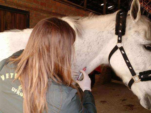 img 2692 - Top 10 cavalos mais caros da história
