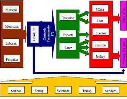 Organograma SAG Equinocultura