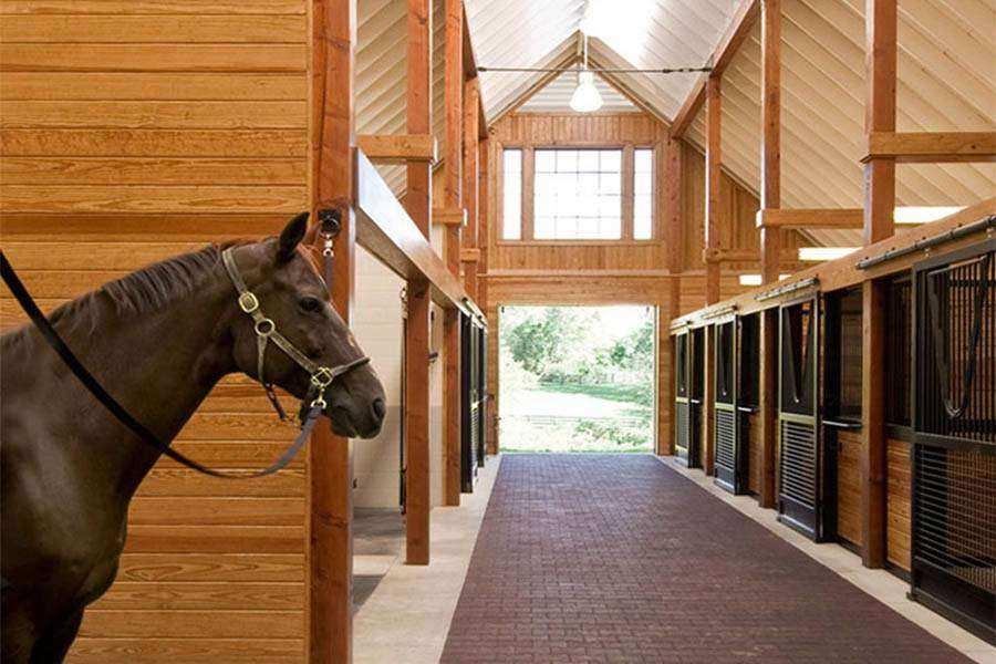 Pisos emborrachados para cavalos – Tudo o que você precisa saber!