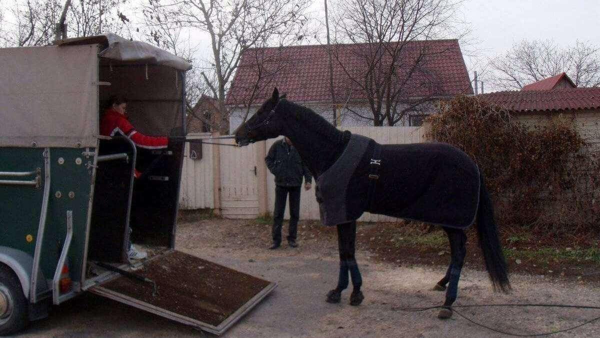 Transporte de cavalos - Tudo o que você precisa saber!