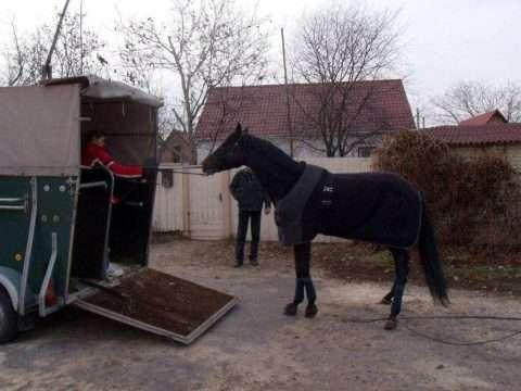 Vedovati Pisos Transporte-cavalo-1328611982_32-2-480x360