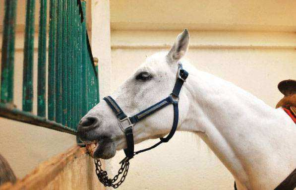 O que o stress pode causar nos cavalos