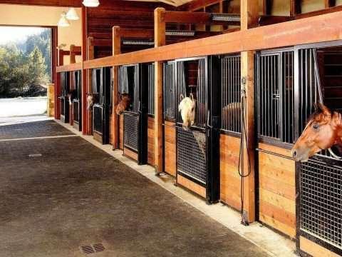 Baia para Cavalos, o guia definitivo!