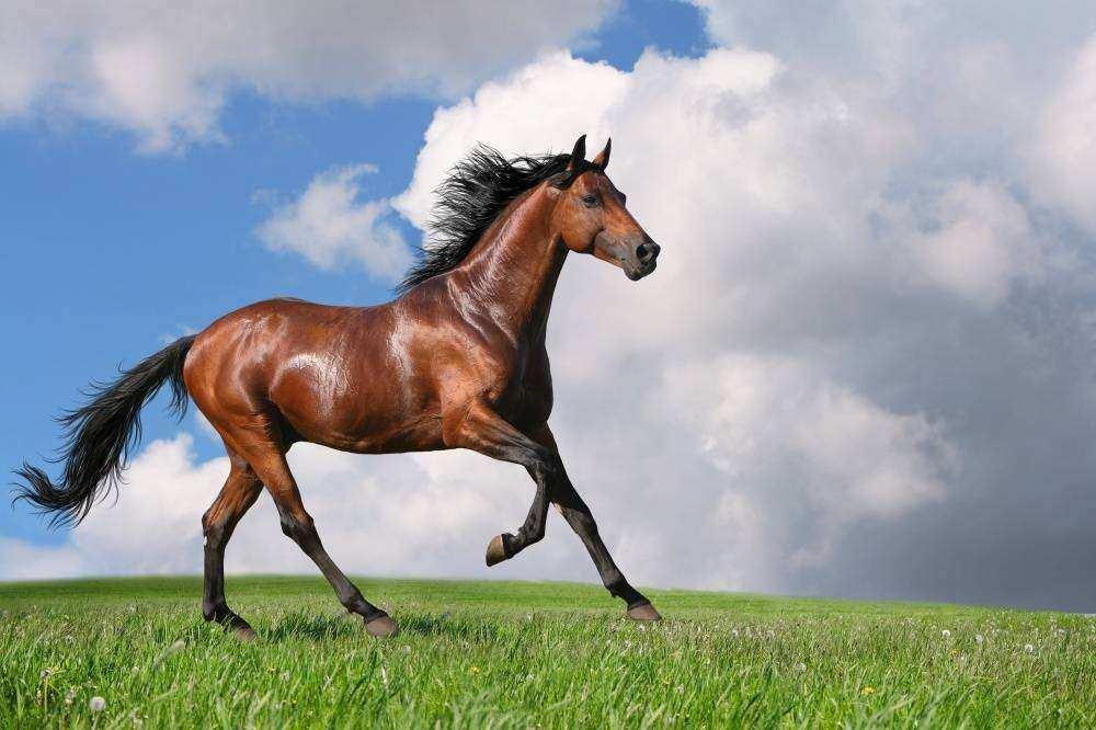 Como deixar seu cavalo bonito e saudável