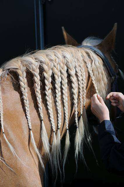 CAvalo10 1 - Crina de cavalo: 20 cavalos com cabelos melhores que o seu