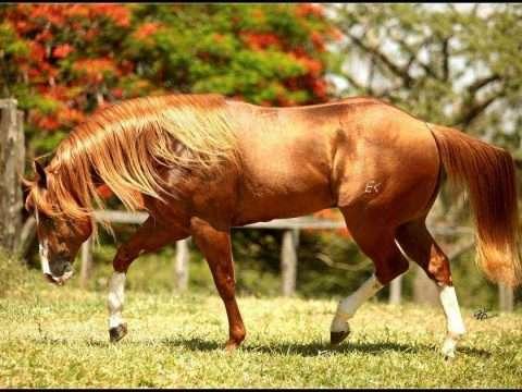 Vedovati Pisos Cavalo-quarto-de-milha-destaque-940x630-480x360