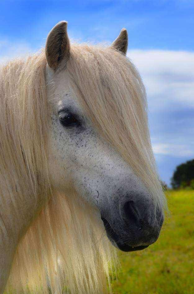 Cavalo01 1 - Crina de cavalo: 20 cavalos com cabelos melhores que o seu