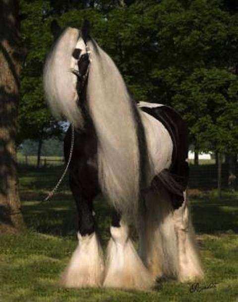 Cavalo02 1 - Crina de cavalo: 20 cavalos com cabelos melhores que o seu