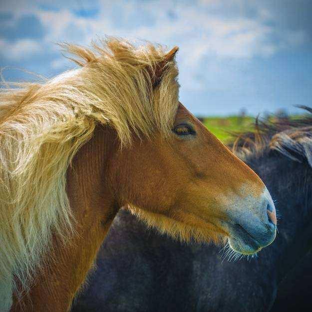 Cavalo03 1 - Crina de cavalo: 20 cavalos com cabelos melhores que o seu