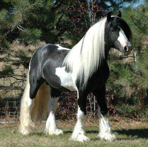 Cavalo06 1 - Crina de cavalo: 20 cavalos com cabelos melhores que o seu