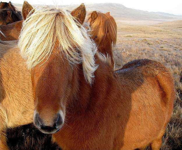 Cavalo07 1 - Crina de cavalo: 20 cavalos com cabelos melhores que o seu