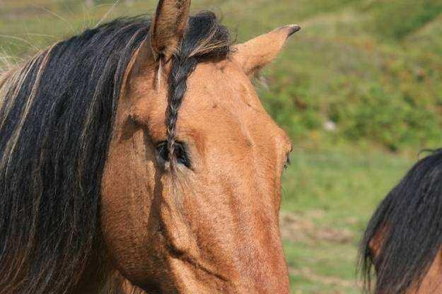 Cavalo08 1 - Crina de cavalo: 20 cavalos com cabelos melhores que o seu