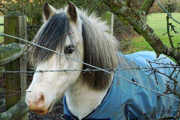 Cavalo09 1 - Crina de cavalo: 20 cavalos com cabelos melhores que o seu