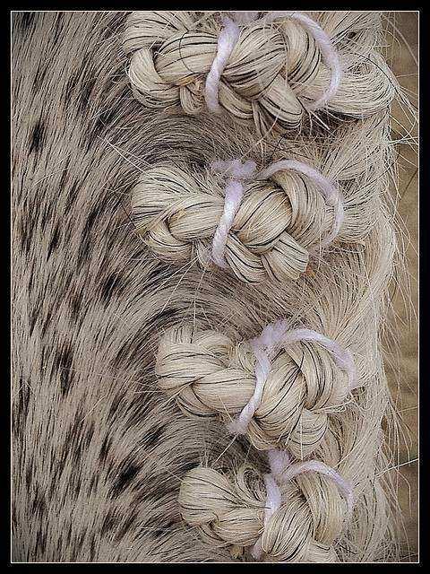 Cavalo11 1 - Crina de cavalo: 20 cavalos com cabelos melhores que o seu