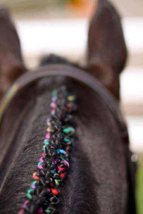 Cavalo12 1 1 - Crina de cavalo: 20 cavalos com cabelos melhores que o seu