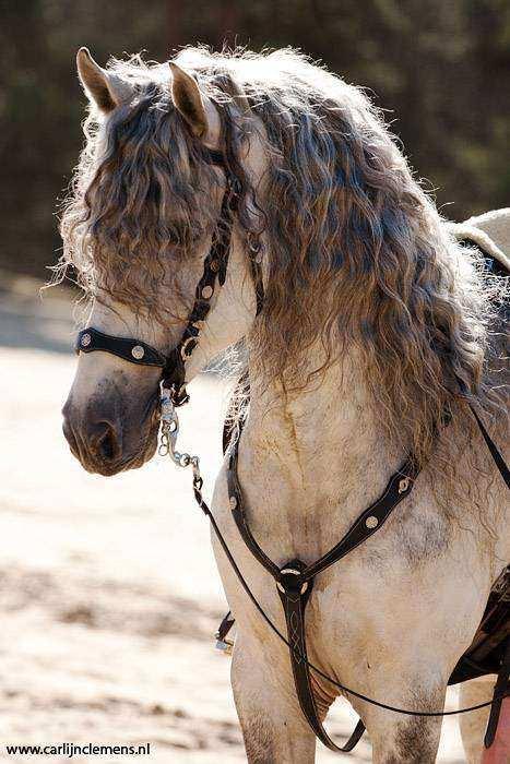 Cavalo14 1 - Crina de cavalo: 20 cavalos com cabelos melhores que o seu