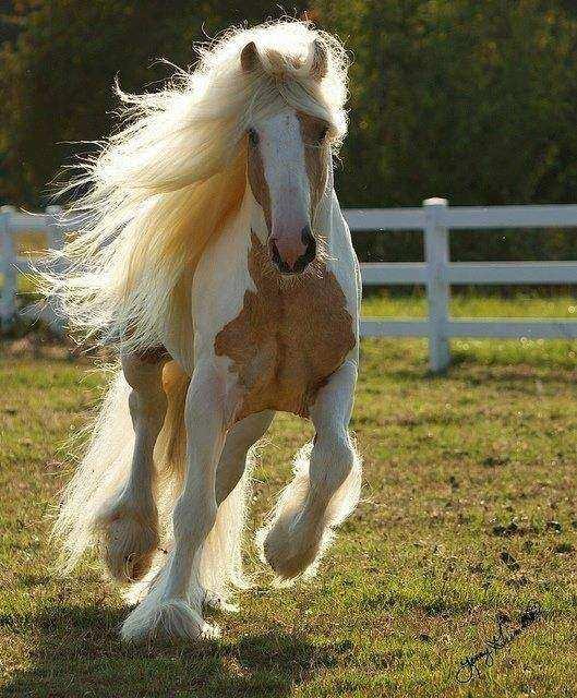 Cavalo16 1 - Crina de cavalo: 20 cavalos com cabelos melhores que o seu