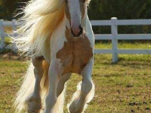 Razões e dicas para comprar um cavalo