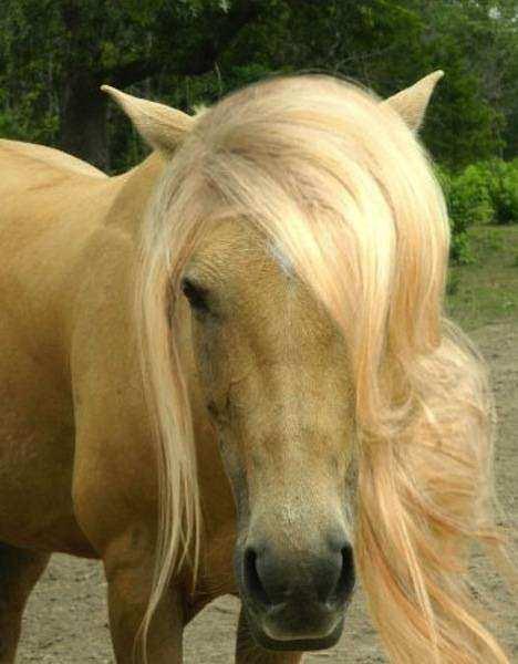 Cavalo18 1 - Crina de cavalo: 20 cavalos com cabelos melhores que o seu