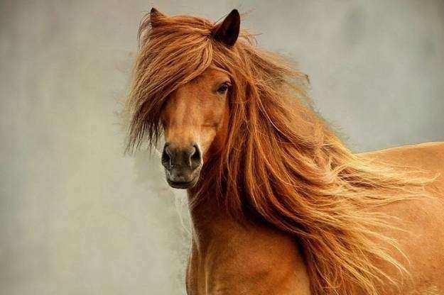 Cavalo19 1 - Crina de cavalo: 20 cavalos com cabelos melhores que o seu