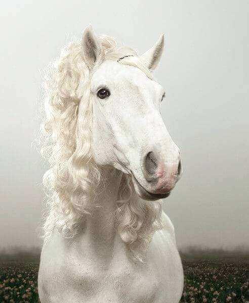 Cavalo20 1 - Crina de cavalo: 20 cavalos com cabelos melhores que o seu