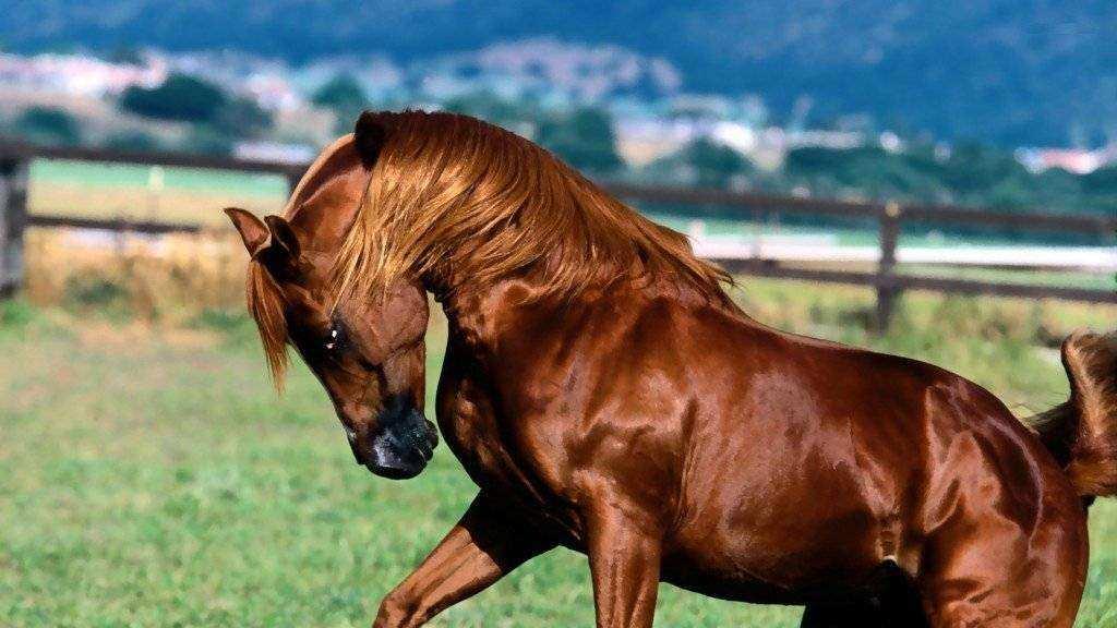 Vedovati Pisos para cavalos