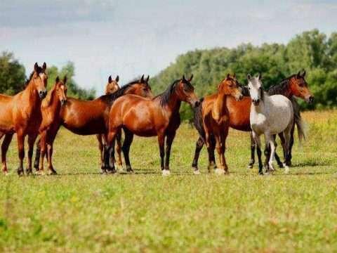 35doma natural cursos cpt 480x360 - Como Domar Cavalos - O guia completo para iniciantes