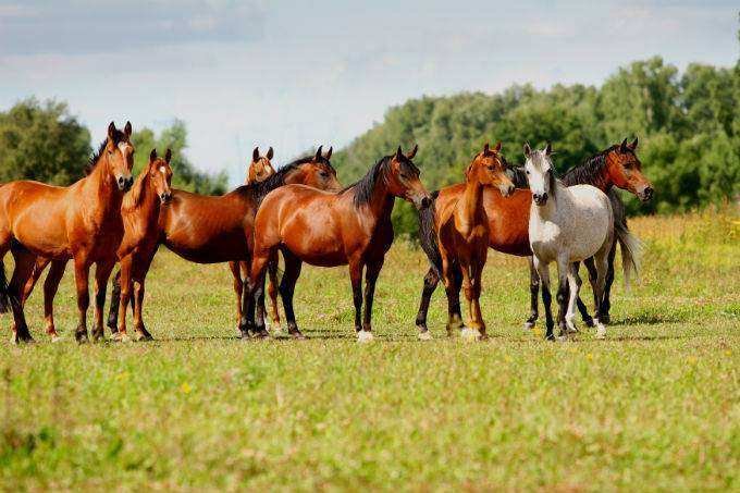 35doma natural cursos cpt - Como Domar Cavalos - O guia completo para iniciantes