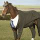 O que os cavalos nos ensinam sobre negócios