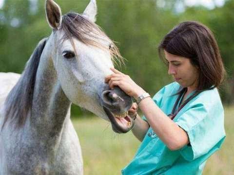 Proteja seu cavalo de doenças respiratórias e economize (muito!) com o veterinário