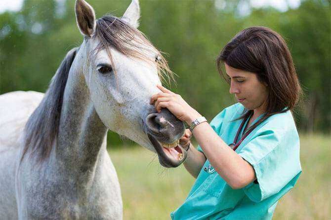 Doenças respiratórias em equinos. Veja como evitar!