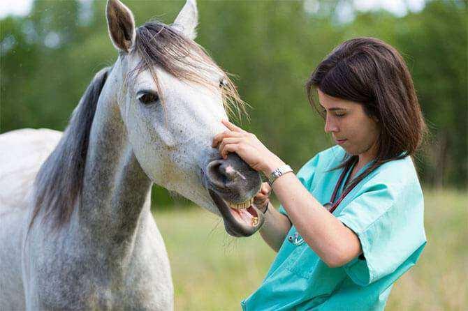 Vedovati Pisos doencas-respiratorias-cavalo